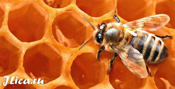 Пчелиный воск для кожи лица отзывы