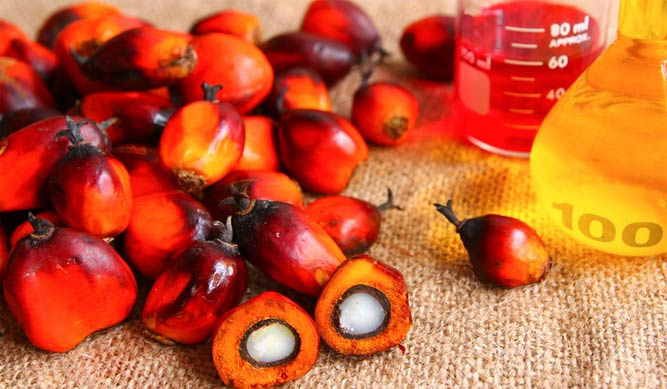 Пальмовое масло польза и вред для здоровья